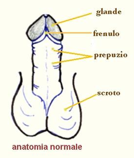 El aumento por medio del masaje del miembro